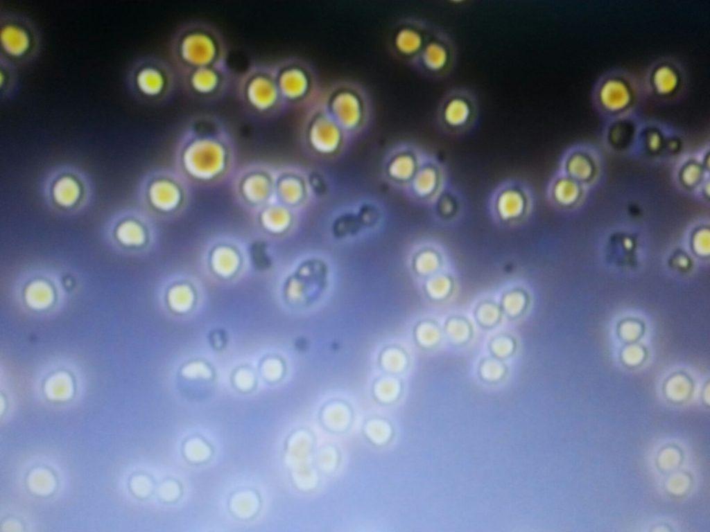 Laboratorio Clínico y Biomédico